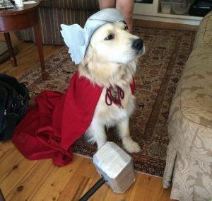 labra-thor dog pet pun halloween costume