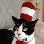 halloween cat pet pun costumes cat in the hat