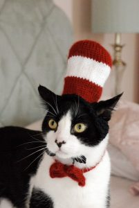 halloween cat pet pun costumes cat in the hat